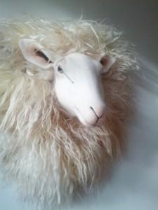 _schapenkop Josh